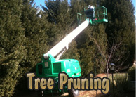 Yards By Us - Tree pruning services
