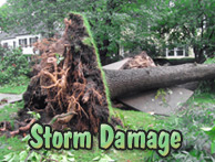 Yards By Us - Storm clearing tree services