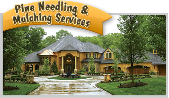 Yards By Us Pine Needling and Mulching service